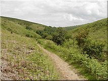 ST1340 : Top of Hodders Combe near Lady's Edge by John Thorn