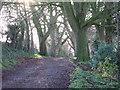 SU3744 : Ladies Walk, Andover. Winter. by Lee Hargreaves