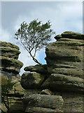 SE2064 : Brimham Rocks by Nigel Homer
