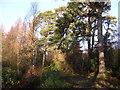 NS5776 : Craigmaddie Plantation by Chris Upson