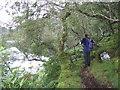 NM6772 : Path through woods alongside Loch Moidart by Andrew Dann
