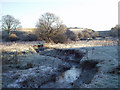 NY0837 : Field behind Roseghyll Mill by ally McGurk