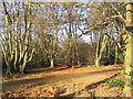 TQ4399 : Epping Forest by Andrew Dann