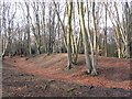 TL4300 : Beeches on Ambresbury Banks by Eleanor Dann
