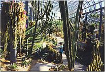 NJ9304 : Cactus House, Winter Gardens, Duthie Park. by Colin Smith