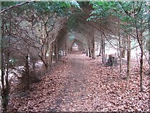 TQ1352 : Avenue of Yew Trees by Martyn Davies