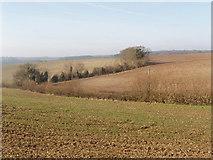 SU8790 : Fields near High Wycombe by David Hawgood