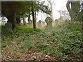 NY2041 : Old Graveyard, Mealsgate by Bob Jenkins