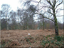 SE4208 : West Haigh Wood by Richard Spencer