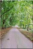 SO5563 : The Avenue, Leysters by Tim Jones