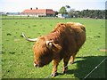 NT6478 : Highland cow by Lisa Jarvis