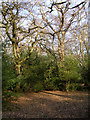 SU2913 : Rockram Wood, New Forest by Jim Champion