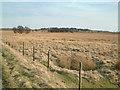 SK3067 : Harewood Moor. by Mike Fowkes