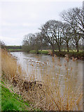 ST6669 : Looking upstream on the River Avon by Linda Bailey