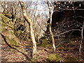 NS2372 : Former railway trackbed in Shielhill Glen by Thomas Nugent