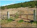 NZ3437 : Plantation, Quarrington Hill by Oliver Dixon