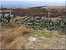 NN9507 : Sheep skeleton on Carlownie Hill by Iain Macaulay