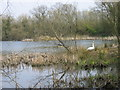 NZ3248 : Joe's Pond Rainton Meadows Nature Reserve by Les Hull