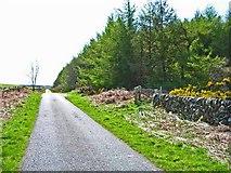 NX3160 : Roadside plantation by Oliver Dixon