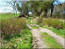 NX3262 : Old Military Road at Ardachie by Oliver Dixon