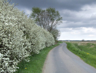 TF1966 : Country Lane. by Mike Fowkes