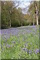 SO6229 : Bluebells in Yatton Wood by Philip Halling