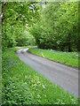 SU7345 : Vinney Copse, Sutton Common by Hugh Chevallier