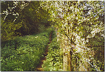 TQ0339 : Wey South Path South-West of Rowly. by Colin Smith