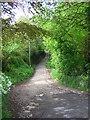 SJ5466 : Woodland path near Tirley Farm, Utkinton. by Andrew Loughran