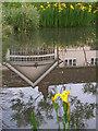 SU7156 : Yellow irises by Andrew Smith
