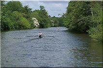 ST6966 : River Avon near Corston by Pierre Terre