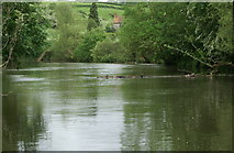 ST6669 : River Avon above Londonderry Wharf by Pierre Terre