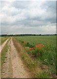 SE6757 : Sand Hutton Common - with Poppies by DS Pugh