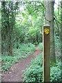 ST6876 : Footpath through woodland near Shortwood Lodge by Duncan Gammon