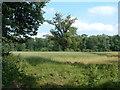 SJ3331 : Great oaks from corn grows? by Alan Stewart