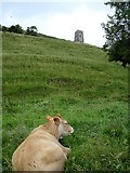 ST5138 : Glastonbury Tor by Penny Mayes