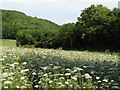 ST9964 : Meadow at the base of Roundway Hill by Doug Lee