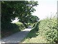 SJ3233 : Great Oaks line the lane at Henlle by John Haynes