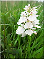 NM4257 : Heath Spotted Orchid, Laorin Bay by Lisa Jarvis