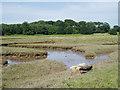NT6380 : Marshland near Tyninghame by Eileen Henderson