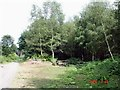 SJ5271 : Manley - picnic area in Delamere Forest by Mike Harris