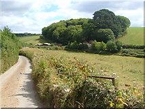 SX7649 : Timber yard near East Allington by Derek Harper