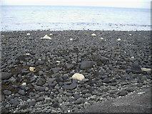 D3510 : Beach near Ballygalley by Nygel Gardner