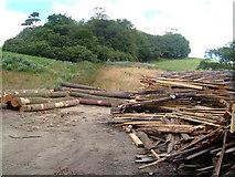 SX7649 : Timber yard on Green Lane, and Winnowing Close Plantation by Derek Harper
