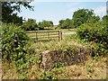 SO5871 : Orchard, Weston Court by Richard Webb
