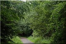 J4477 : Cairn Wood, Craigantlet by Albert Bridge