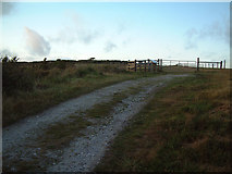 SW9462 : Path to Castle An Dinas by Gary Rogers