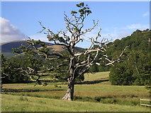 NY2622 : Lightning Tree by Andy Beecroft