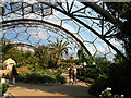 SX0554 : The Hot, Dry Biome: Eden Project by Pam Brophy