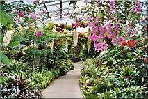 NJ9304 : Winter Gardens, Duthie Park, Aberdeen by Carol Walker